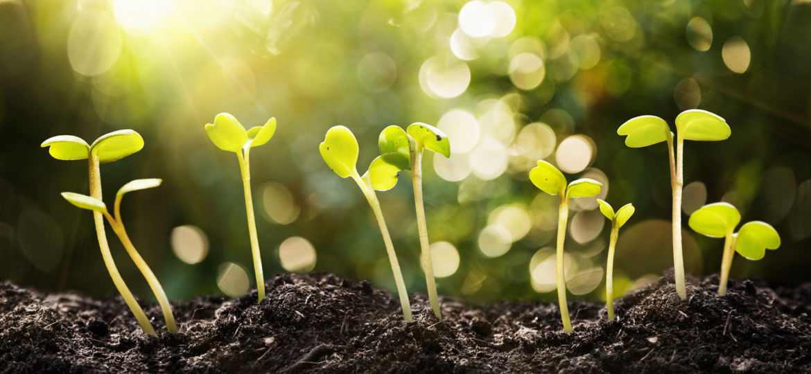Growing Seeds on Natural Sunny Background